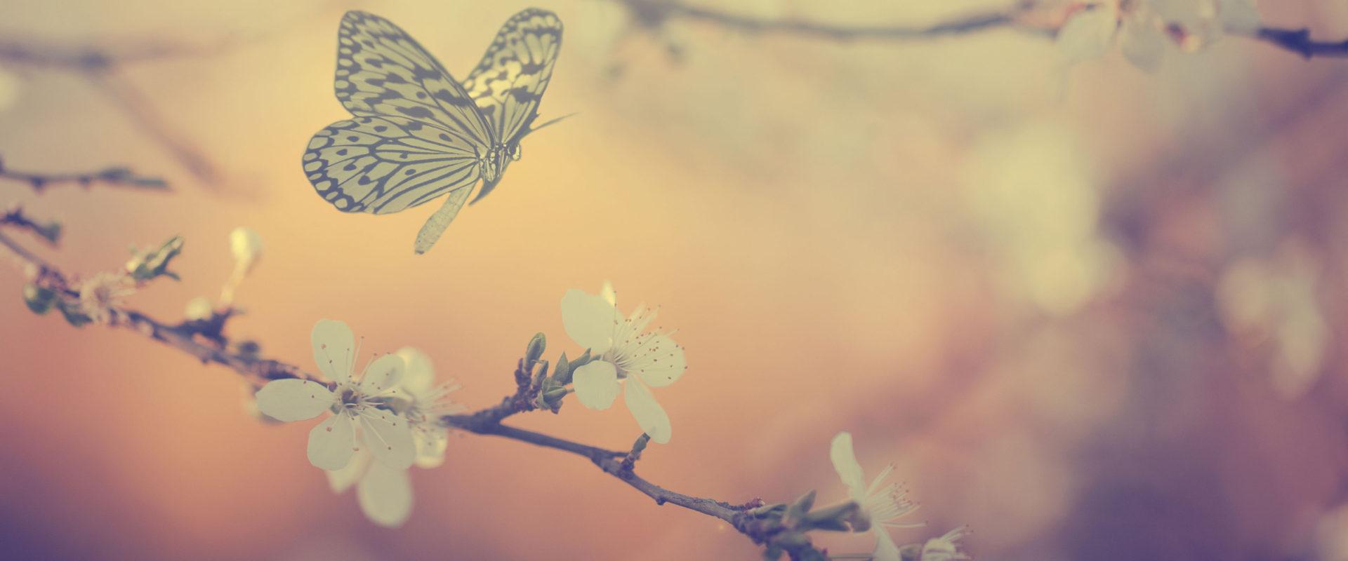 Background-Image-WEB
